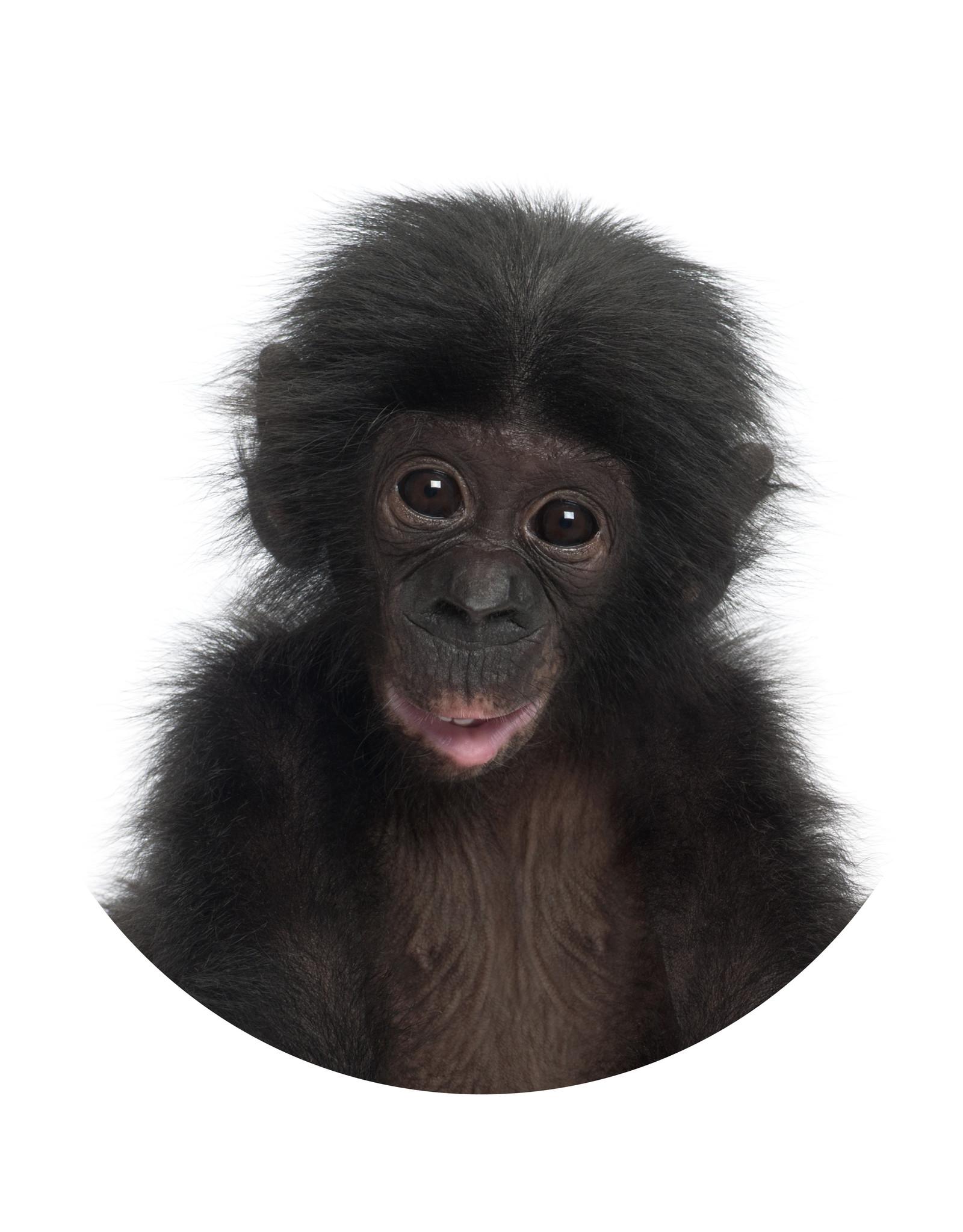 Dunnebier Home Muursticker Chimpansee baby - verwijderbaar