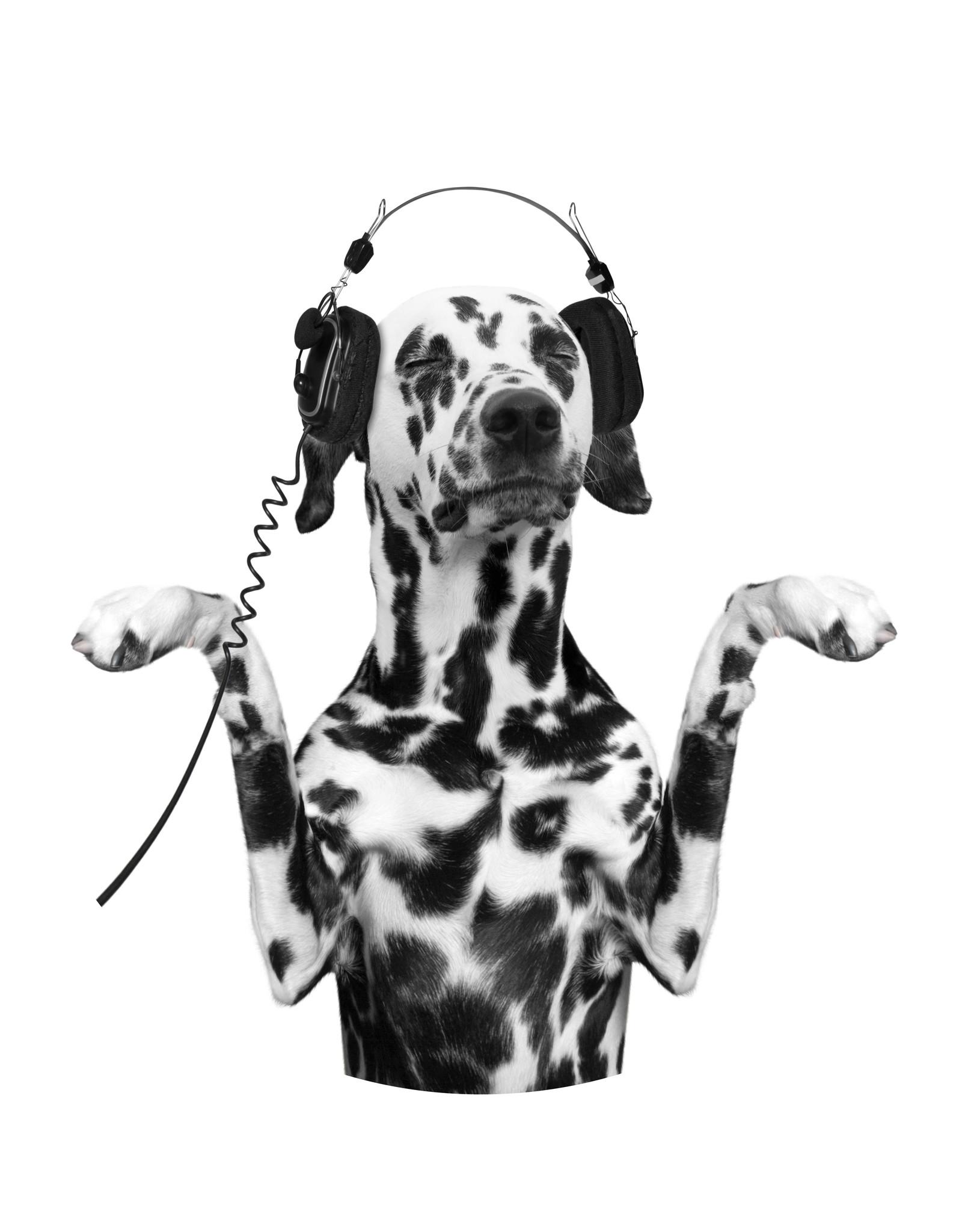 Dunnebier Home Muursticker Dalmatier met koptelefoon - verwijderbaar
