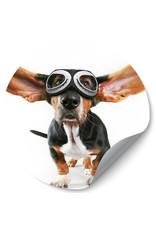Dunnebier Home Muursticker Hond met pilotenbril - verwijderbaar