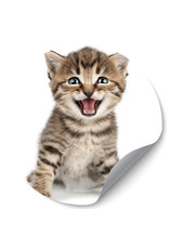 Dunnebier Home Muursticker Kitten - verwijderbaar