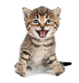 Dunnebier Home Muursticker Kitten