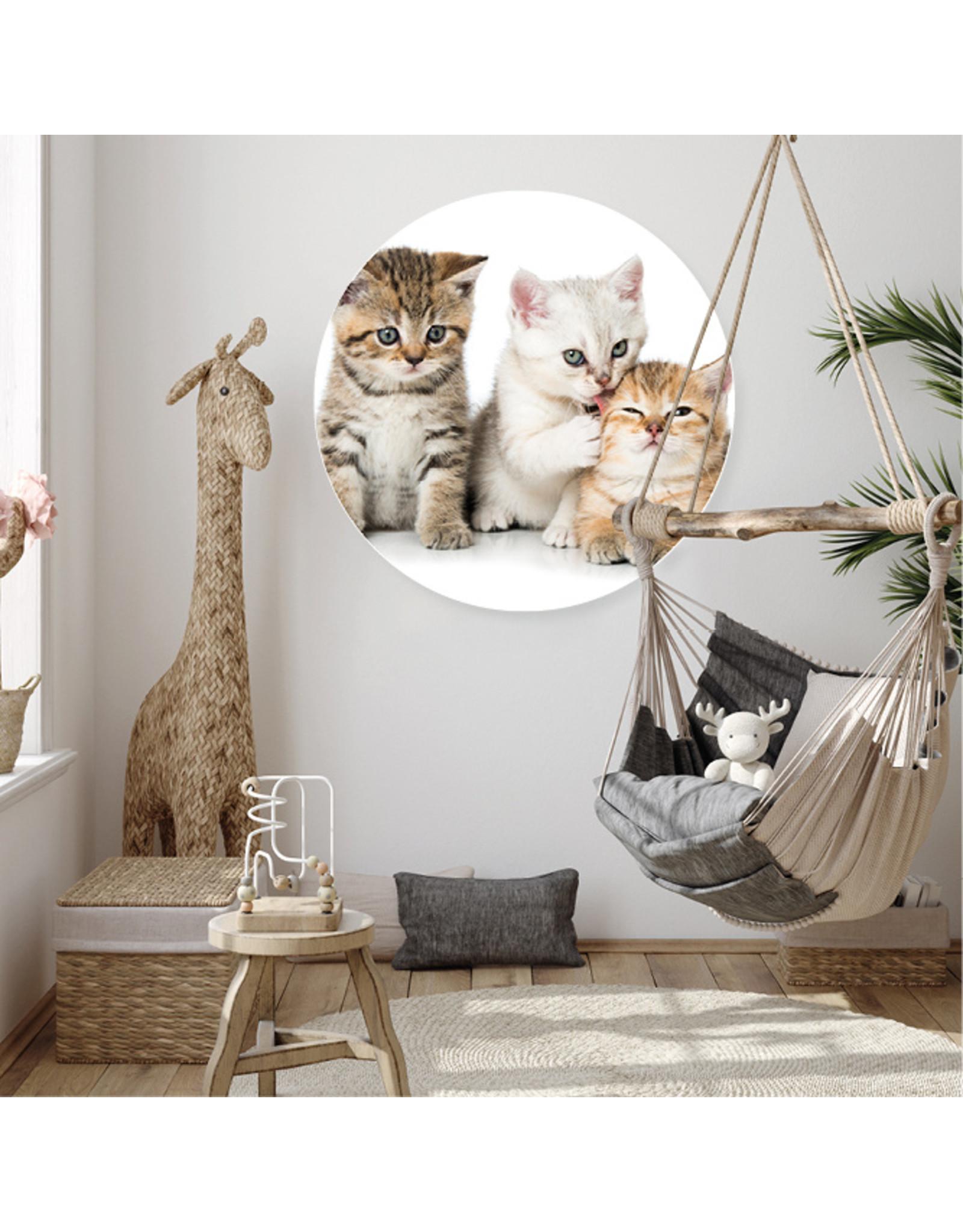 Dunnebier Home Muursticker Kittens - verwijderbaar