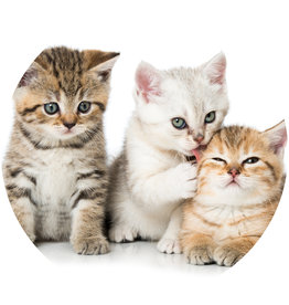 Dunnebier Home Muursticker Kittens