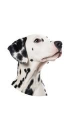 Dunnebier Home Muursticker Dalmatier - verwijderbaar