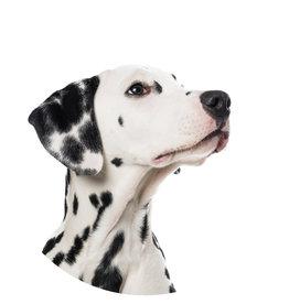 Dunnebier Home Muursticker Dalmatier