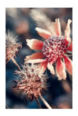 Dunnebier Home Poster Bloemen bedekt met ijs