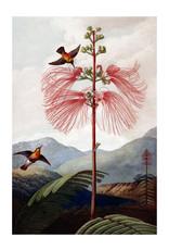 Dunnebier Home Poster Bloem illustratie