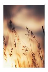 Dunnebier Home Poster Gras