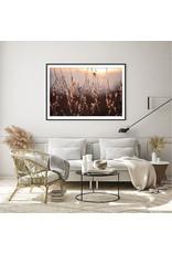 Dunnebier Home Poster Droogbloemen in de zon_No2
