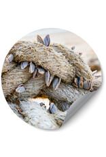 Dunnebier Home Muursticker Touw met schelpen - verwijderbaar