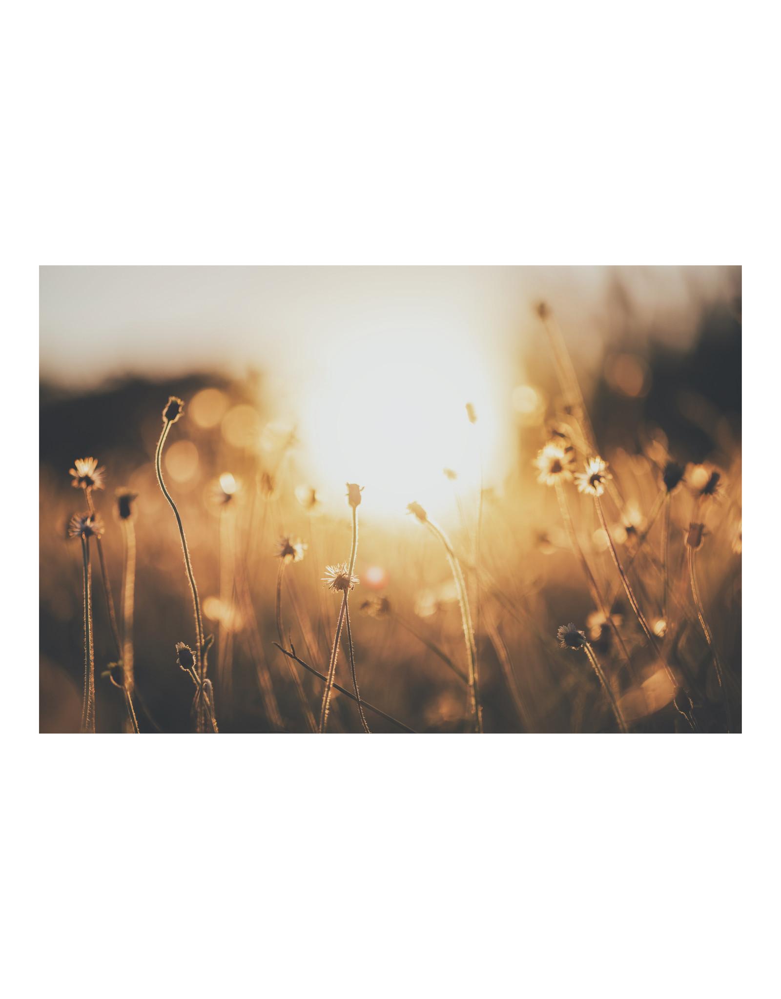 Dunnebier Home Poster Gras in ondergaande zon