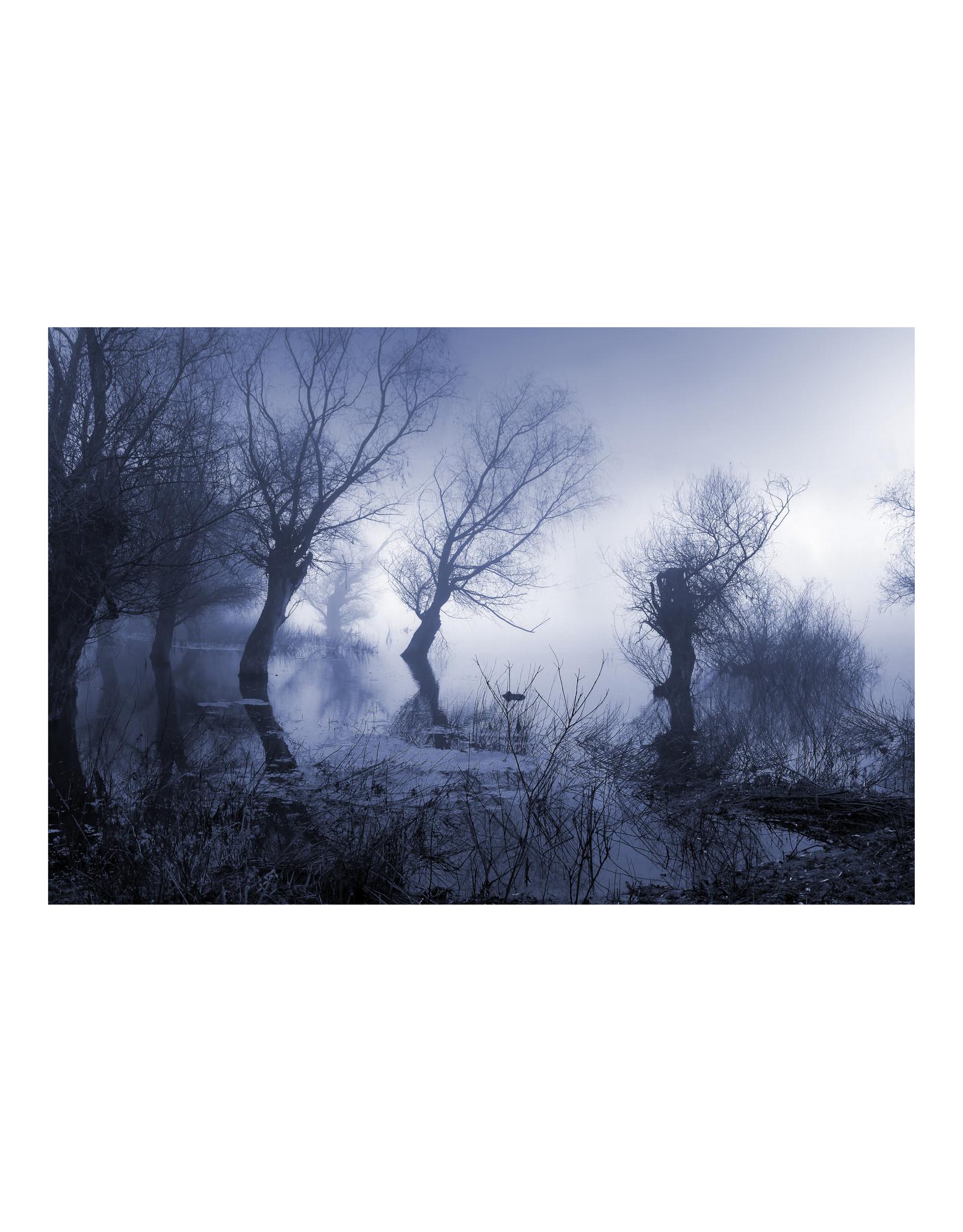Dunnebier Home Poster Bos in de mist