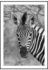 Dunnebier Home Poster Zebra - Anton van Beek Collectie