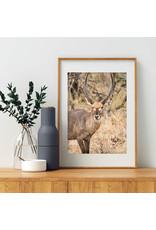 Dunnebier Home Poster Waterbok - Anton van Beek Collectie