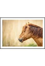 Dunnebier Home Poster Koniks paard - Anton van Beek Collectie