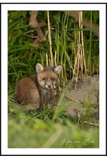 Dunnebier Home Poster Jong vosje - Anton van Beek Collectie