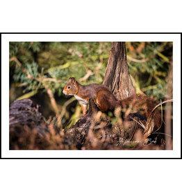 Dunnebier Home Poster Eekhoorn - Anton van Beek Collectie