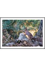 Dunnebier Home Poster Eekhoorn_2 - Anton van Beek Collectie