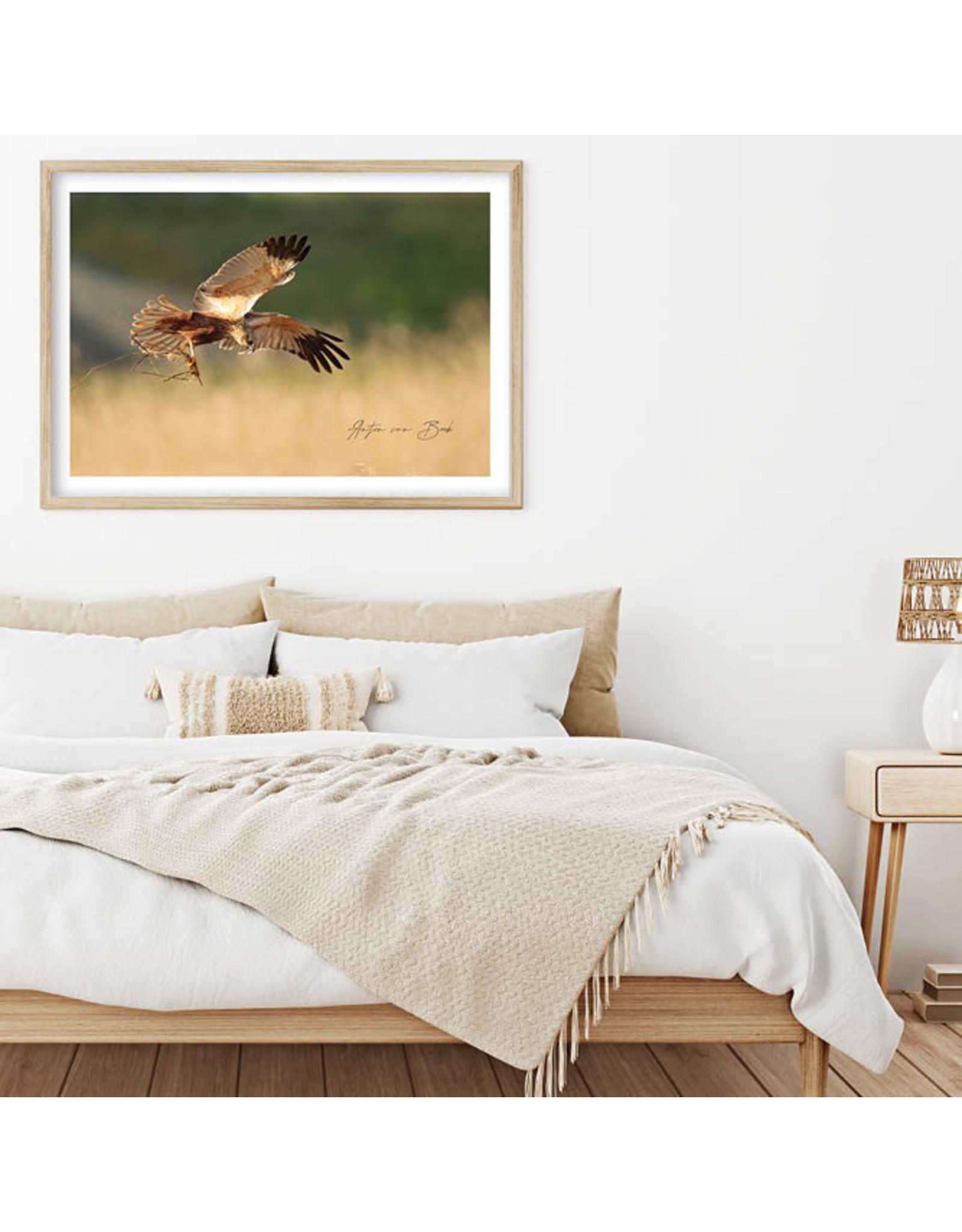Dunnebier Home Poster Bruine Kiekendief - Anton van Beek Collectie