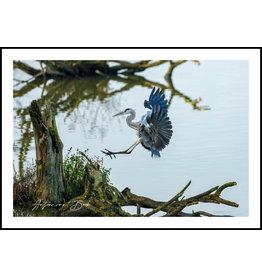 Dunnebier Home Poster Blauwe Reiger - Anton van Beek Collectie