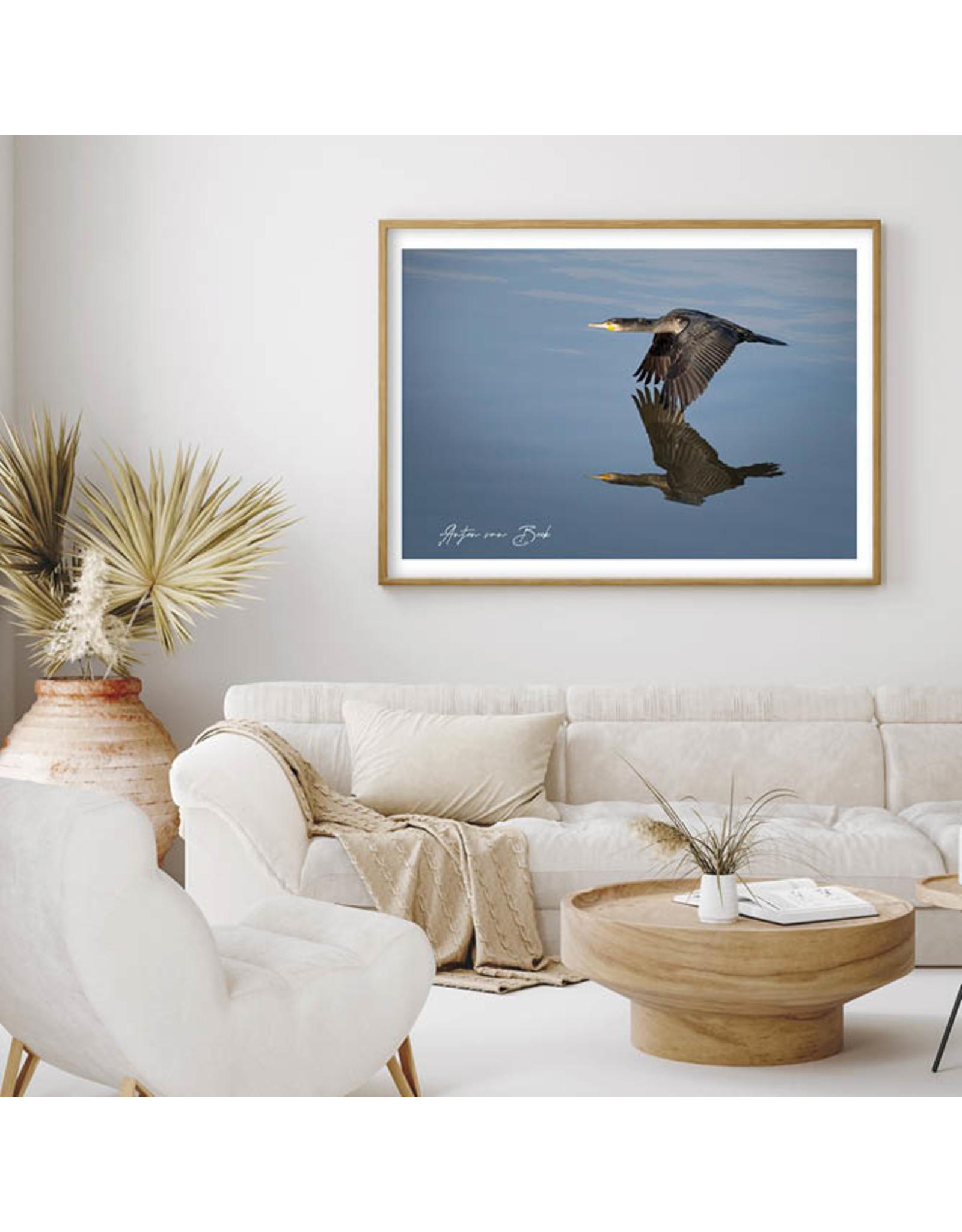 Dunnebier Home Poster Aalscholver - Anton van Beek Collectie