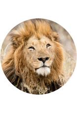 Dunnebier Home Muursticker Leeuw - verwijderbaar