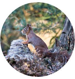 Dunnebier Home Muursticker Eekhoorn