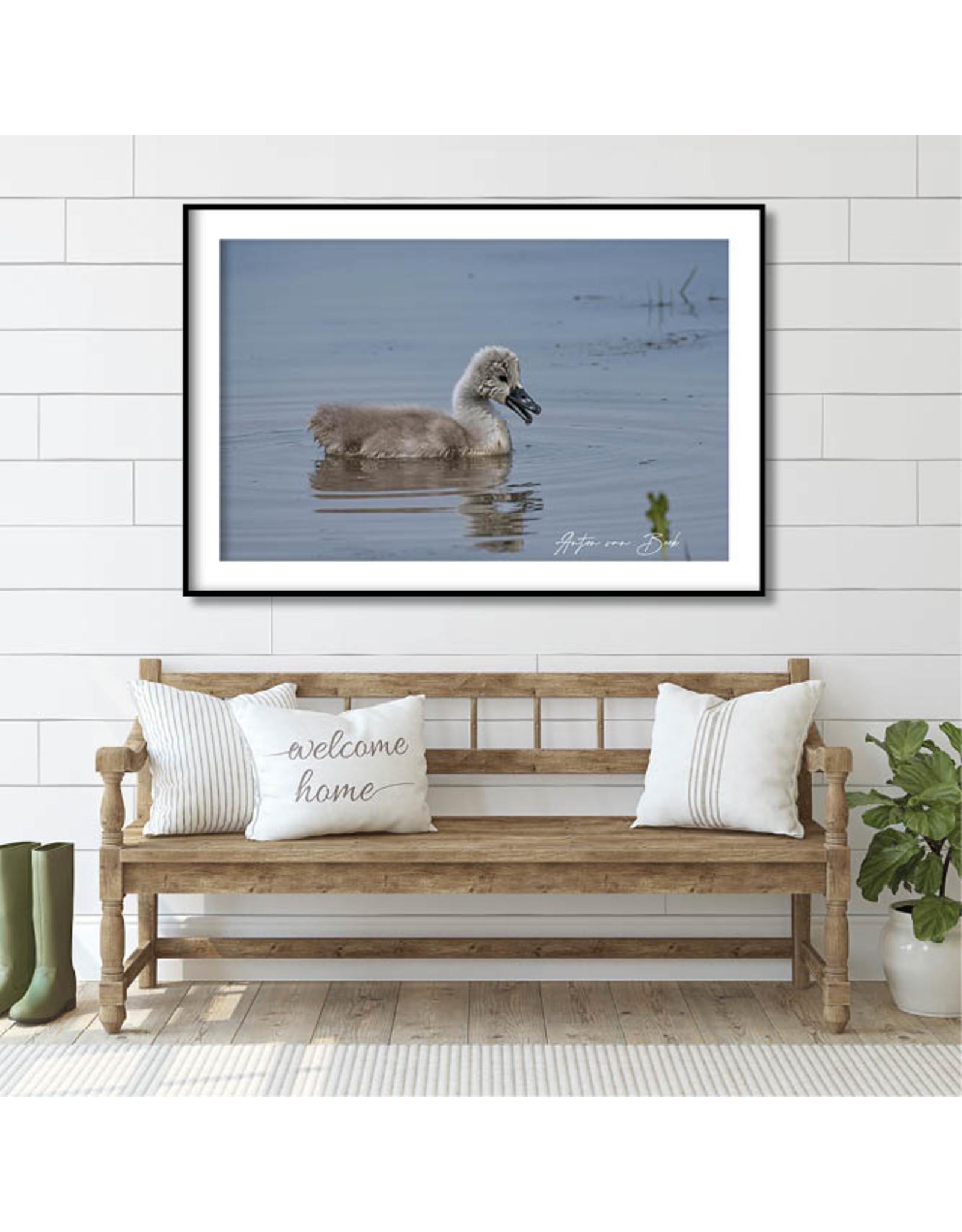 Dunnebier Home Poster Knobbelzwaan - Anton van Beek Collectie