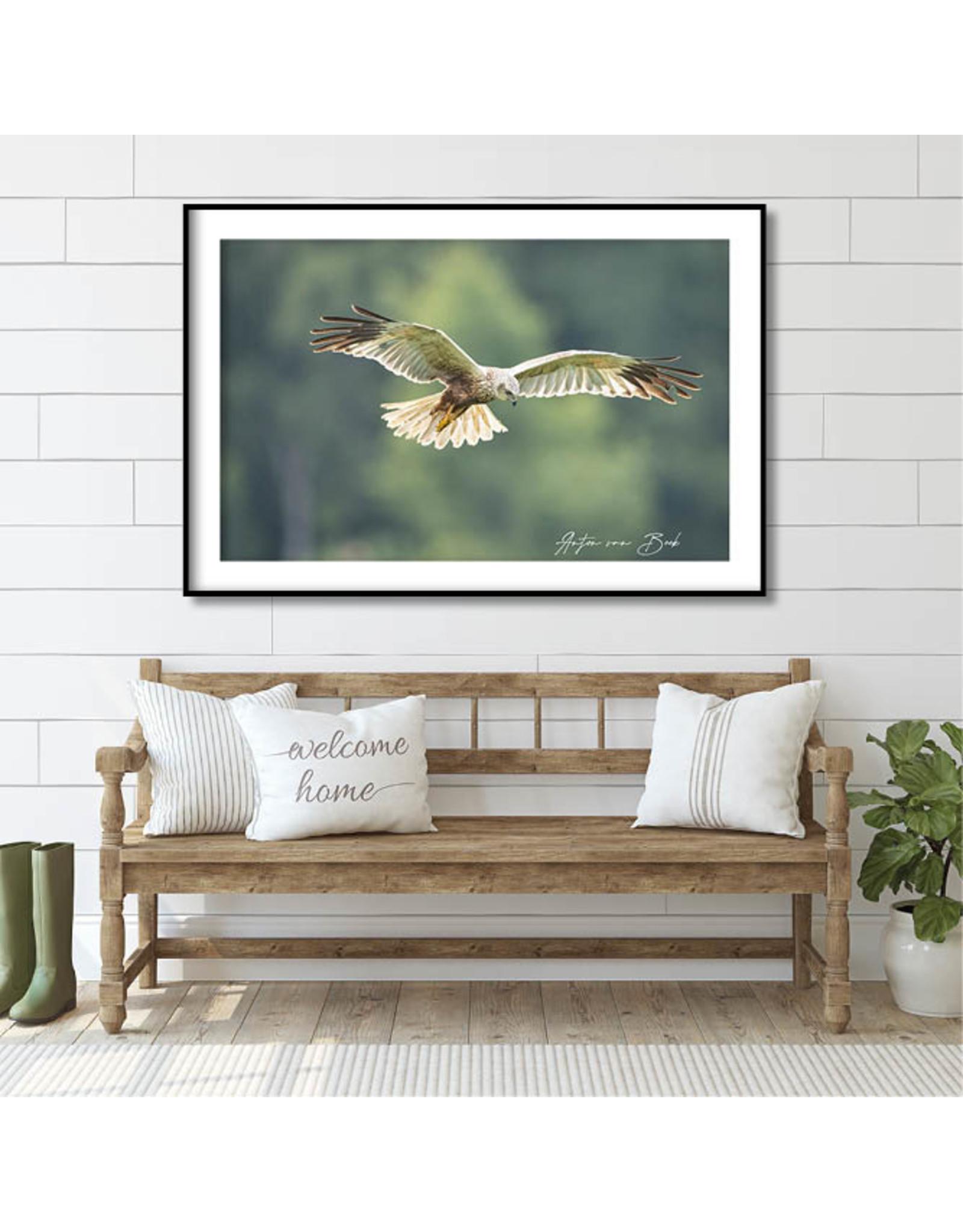 Dunnebier Home Poster Bruine Kiekendief_4 - Anton van Beek Collectie