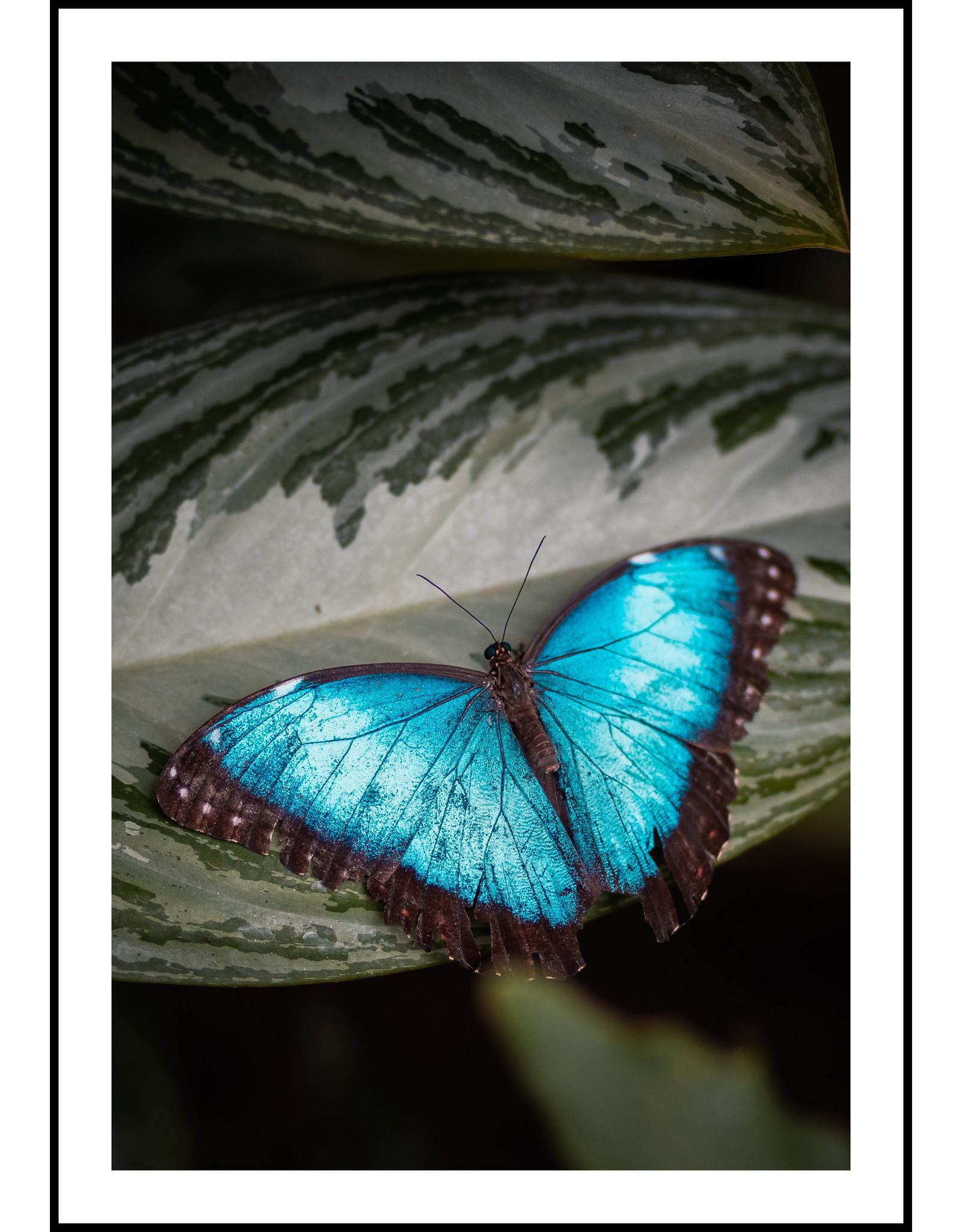 Dunnebier Home Poster Blauwe vlinder
