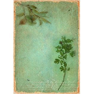 Studio Light Basis , Just Lou Botanical Collection nr.05