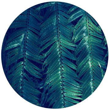 """Serie """"Green"""" Green 6"""