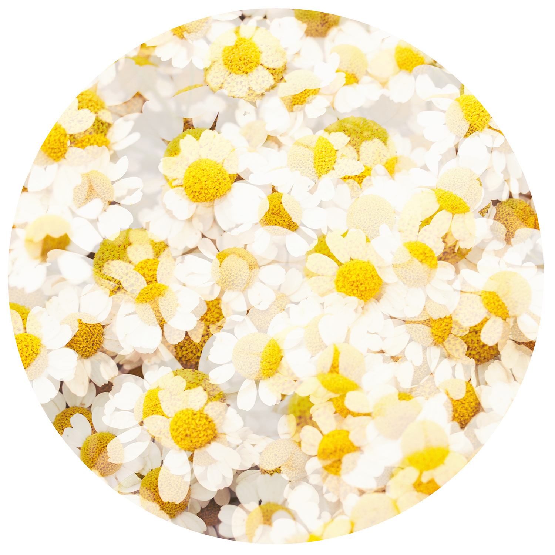 "Serie ""Flowers"" Flower 2"