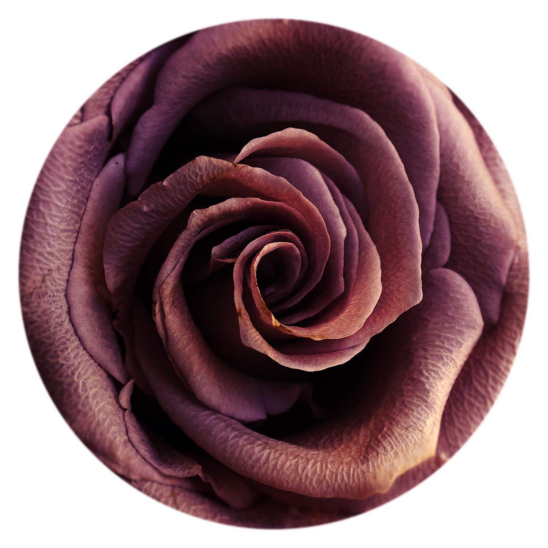 "Serie ""Flowers"" Flower 3"