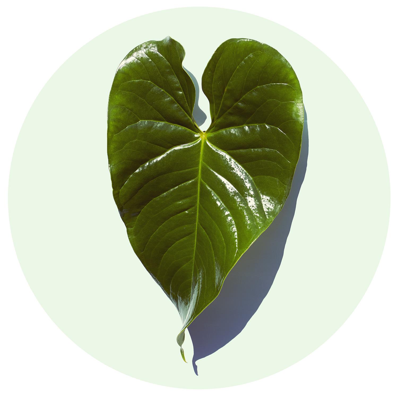 """Serie """"Green"""" Leaf"""