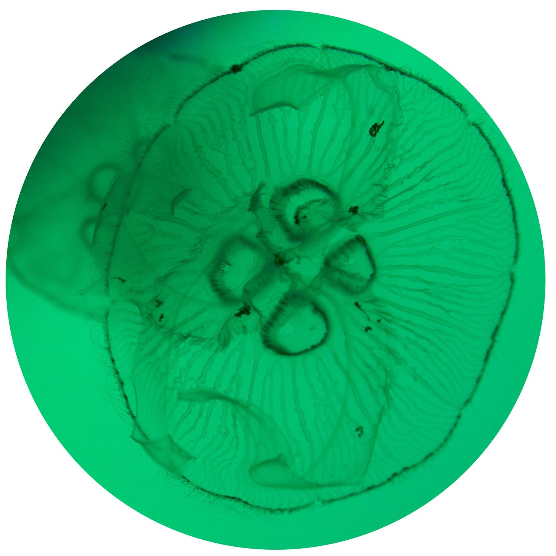 "Serie ""Jellyfish"" Jellyfish 1"