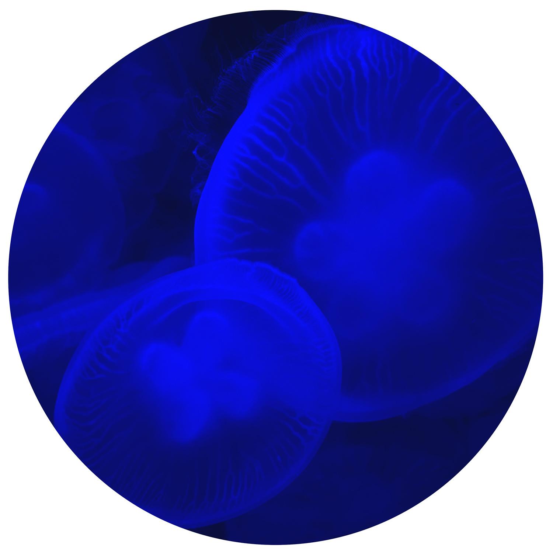 "Serie ""Jellyfish"" Jellyfish 4"
