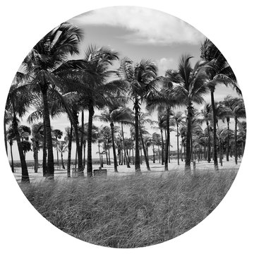 "Serie ""Summertime"" Palm Trees"