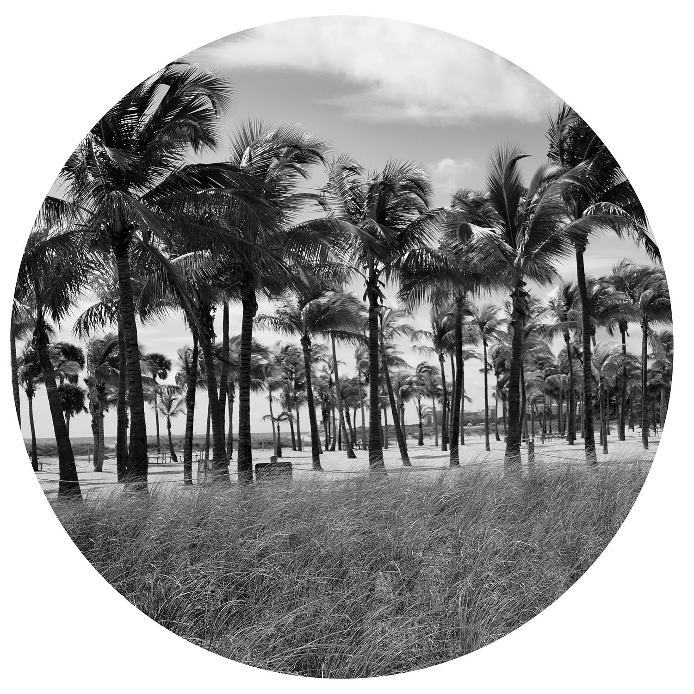 "Serie ""Summertime"" Palm Trees"