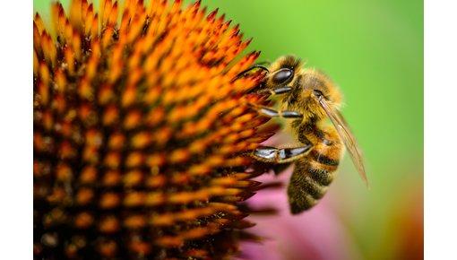 Speciaalbier op basis van kenmerken kopen