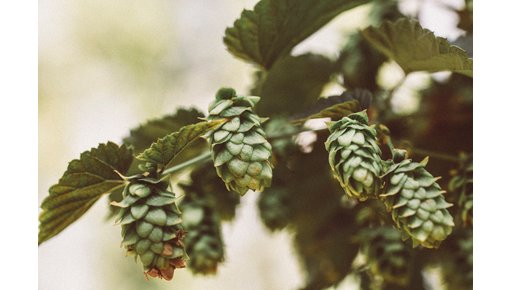 IPA ofwel India Pale Ale kopen. Heel eenvoudig bij CraftOnly.nl
