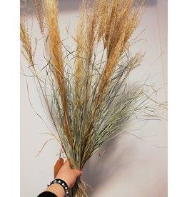 Boeket Grass