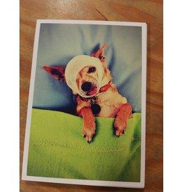 Biri Postkaart sick as a dog