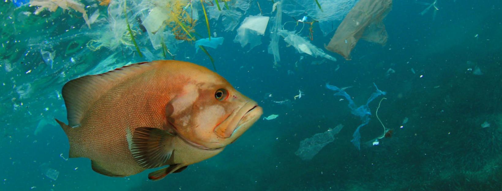 Zwerfafval vis