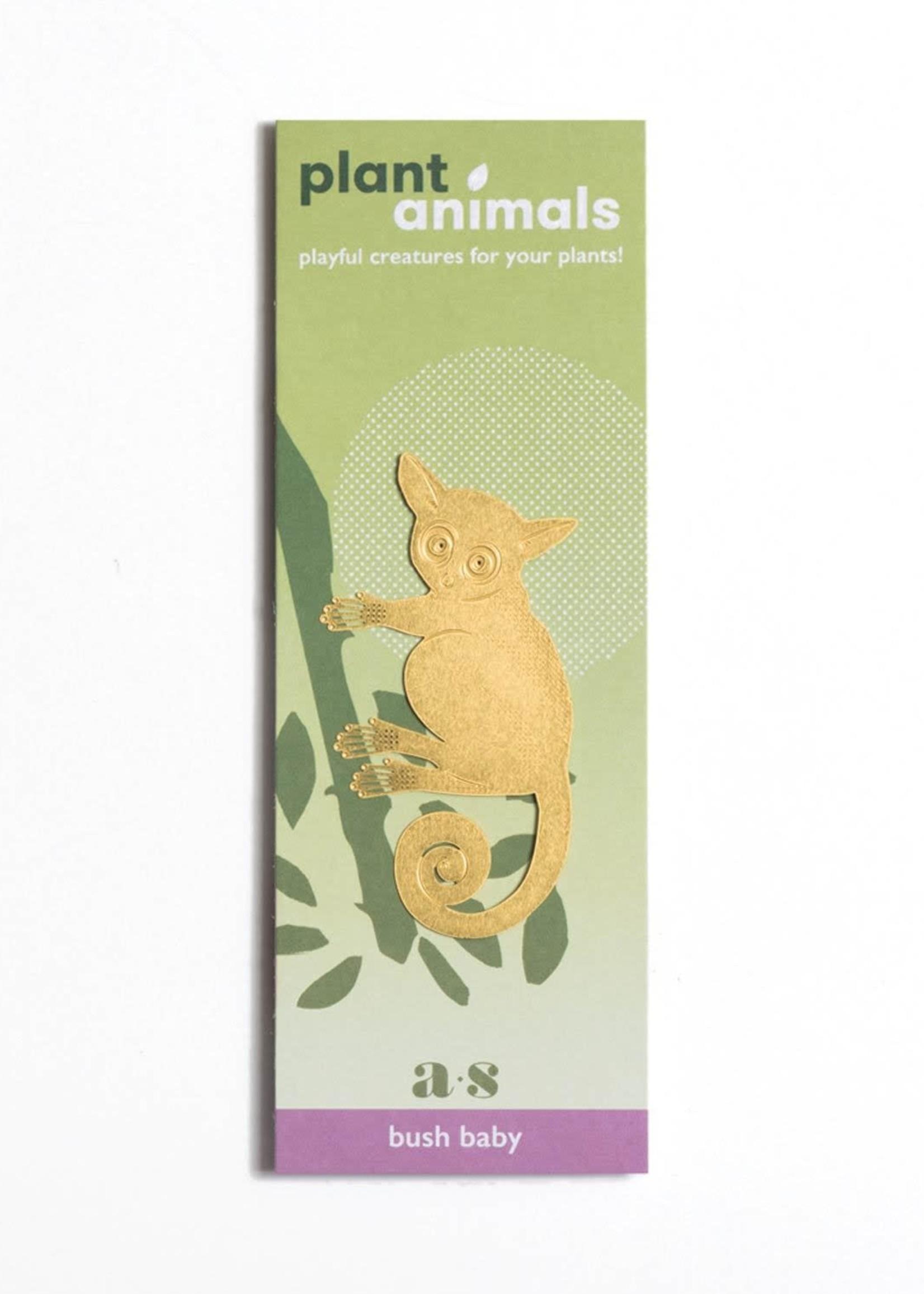 A.S Plant Animal GALAGO bush baby
