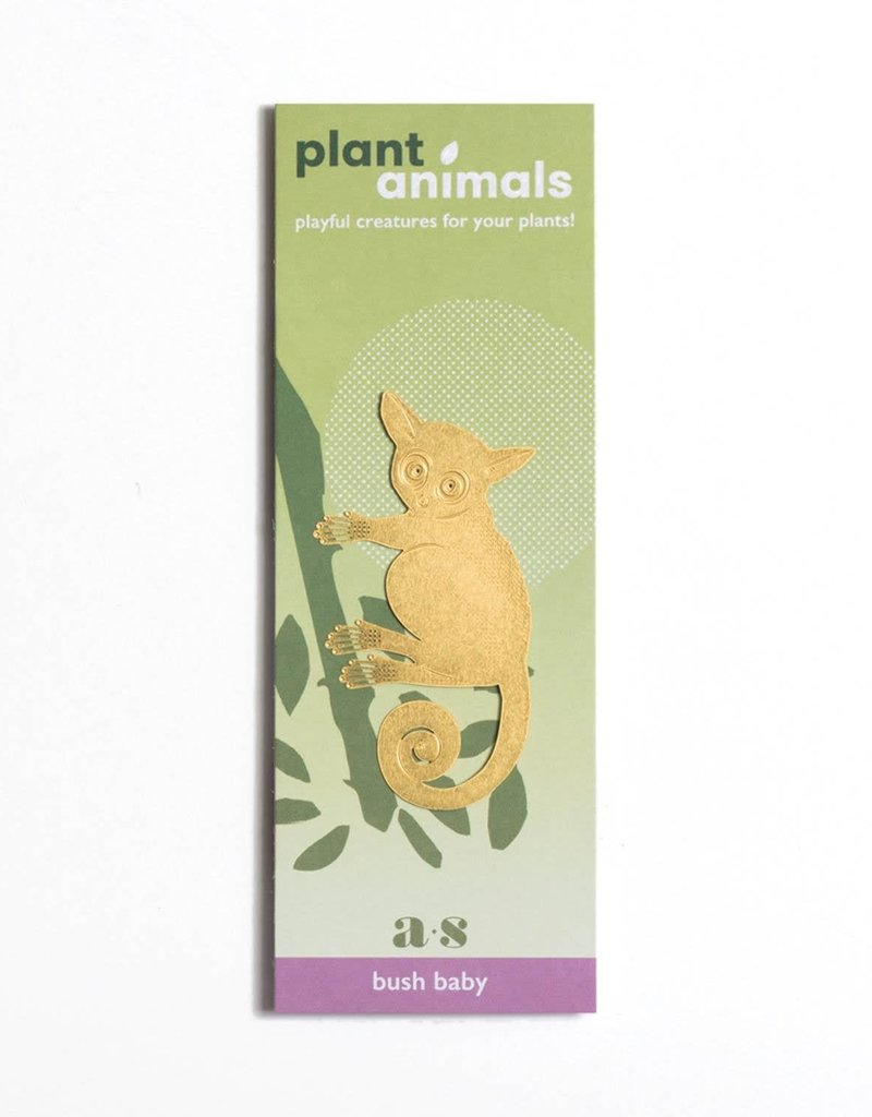 A.S Galago Plant Animal