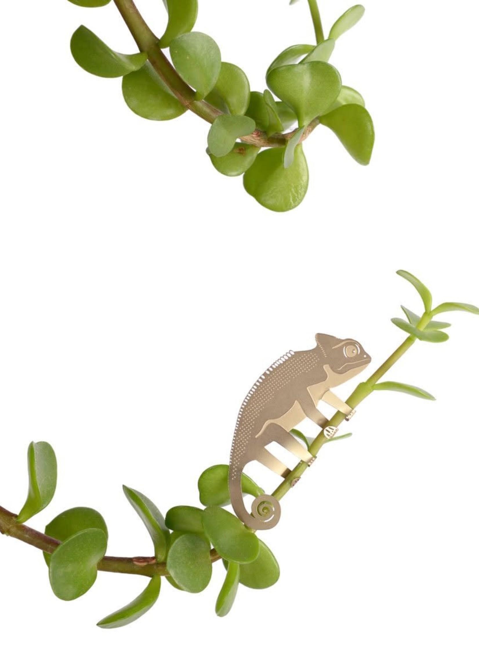 A.S Plant Animal KAMELEON chameleon