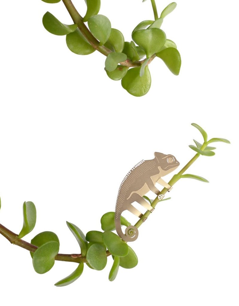 A.S Plant Animal KAMELEON
