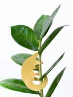A.S Plant Animal MIERENETER pangolin