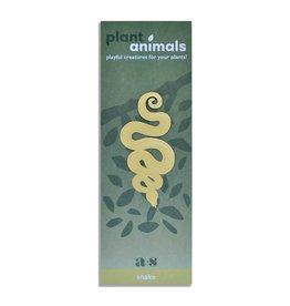 A.S Slang Plant Animal